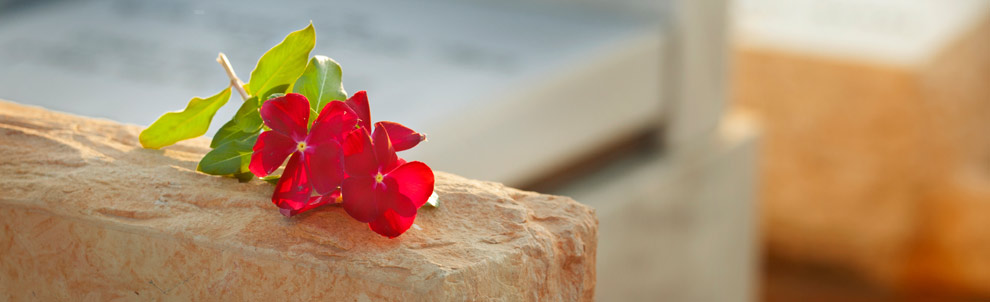 Flower sitting on a tombstone
